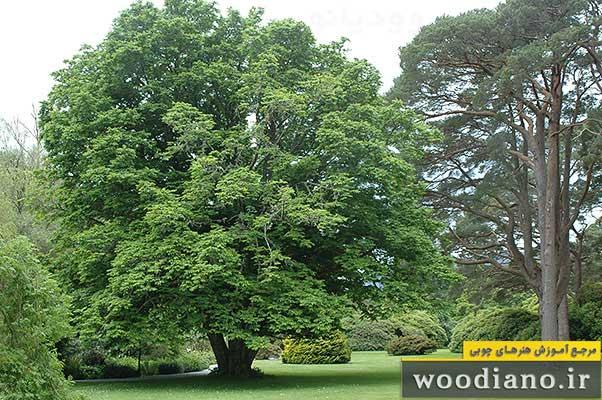 چوب چیست: خواص، ویژگی ها و ساختار فیزیکی و شیمیایی چوبچوب, چوب چیست, انواع چوب, تعریف چوب, نجاری, درودگری, چوبی,درخت, چوب درخت